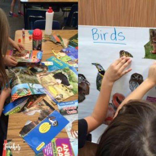 make animal classification posters from magazines