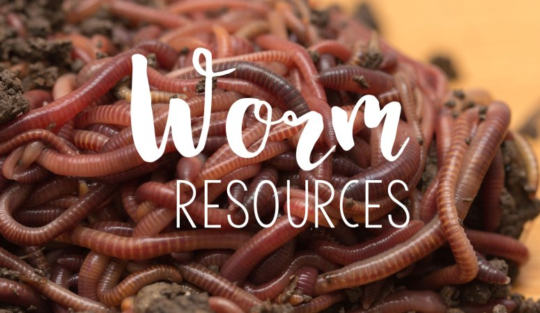 Fun With Worms…Yes, I said Fun!