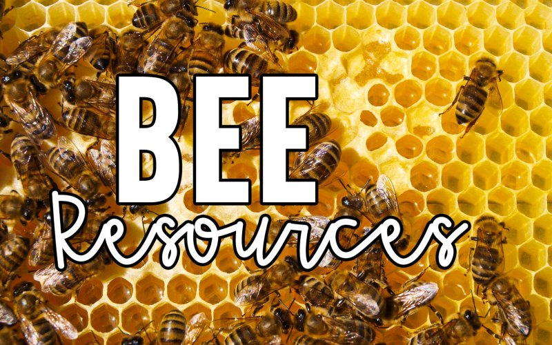 bee resources for the primary classroom