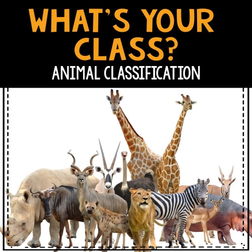 What's You Class Animal Classification