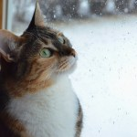 Cat looking out window at the rain