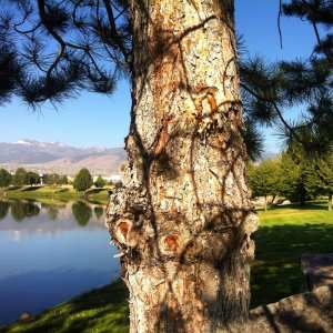 tree-with-shadow-lines-vintage-lake-summer-2016-3