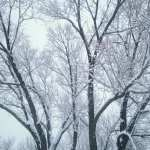 Winter Wonderland Walk Vintage 1.12.17 #8