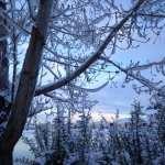 Winter Wonderland Walk Vintage Lake 1.24.17 #5
