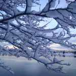Winter Wonderland Walk Vintage Lake 1.24.17 #6