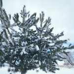 Winter Wonderland Walk with Lillian Vintage lake 1.24.17 #4