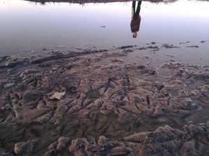 Reflection of Thomas in Water - Walk Vintage Lake 3.10.17