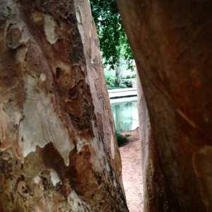 View Between Trees 2016