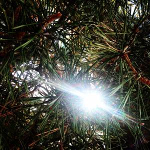 The Light of Freedom Poem Tree and Sunshine Photo 8.2017