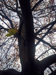 Solo Walk and Solo Leaf 11.21.17