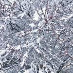 Snow Vintage Lake 3.16.18 #8