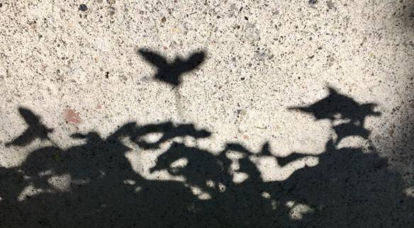 Shadows 5.7.18
