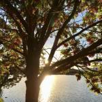 Sunset Walk Vintage Lake 5.28.18 #4