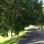 Walk Vintage Lake Path 5.30.18 #3