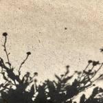 Shadows 6.19.18 #3