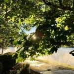 Sunset Walk with Thomas and Lillian Vintage Lake 6.27.18 #4