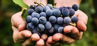 The Worlds Most Important Wine Grapes Part I - Red Wine | Lazenne