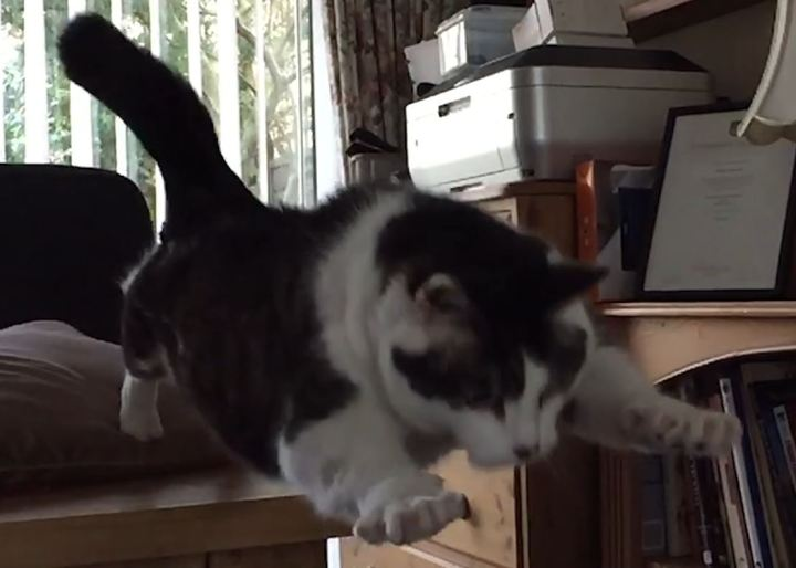 Slow-Motion Cat Jump