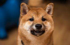 How to buy Shiba Inu Cryptocurrency in India