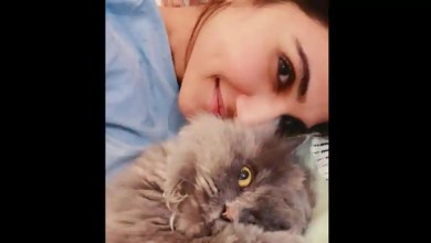 Meow and fureverr: Vaani Kapoor shares adorable picture with her cat – it s viral