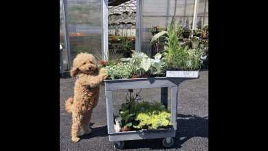Netizens cannot get enough of this adorable doggo 'florist'. Check it out – it s viral