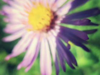 aster 2