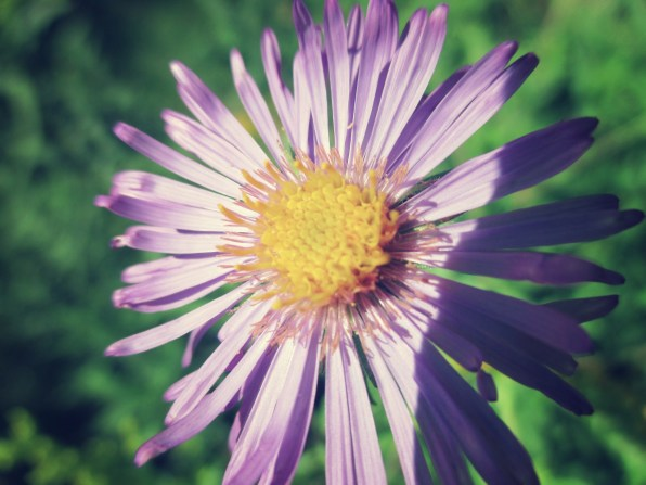 aster 3