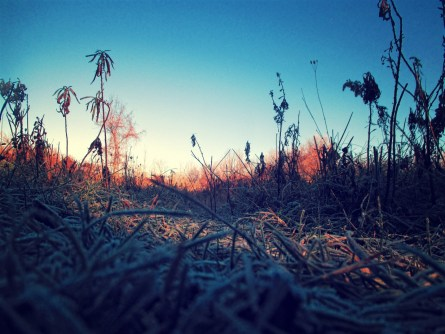 frost_5