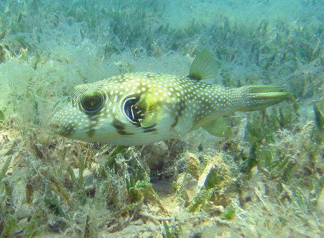 seagrass acts as a nursery to little fish