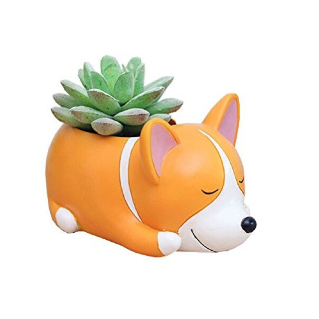 Image description: an orange and white corgi on its stomach with its eyes shut, holding a green succulent.