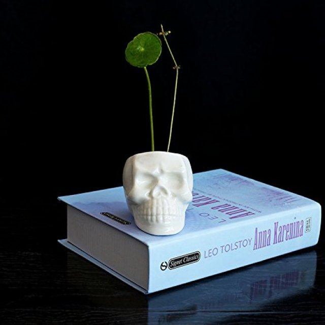 Image description: a white skull planter holds a green plant with two thin stems and a leaf. It rests on a blue book with a black background.
