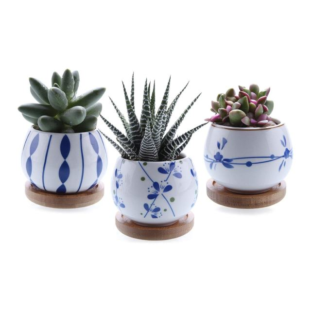Image description: three white planters with various blue designs each hold a succulent and sit on bamboo holders.
