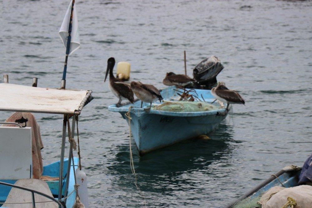 tennis-tourist-chicala-mexico-pelicans-boat-teri-church