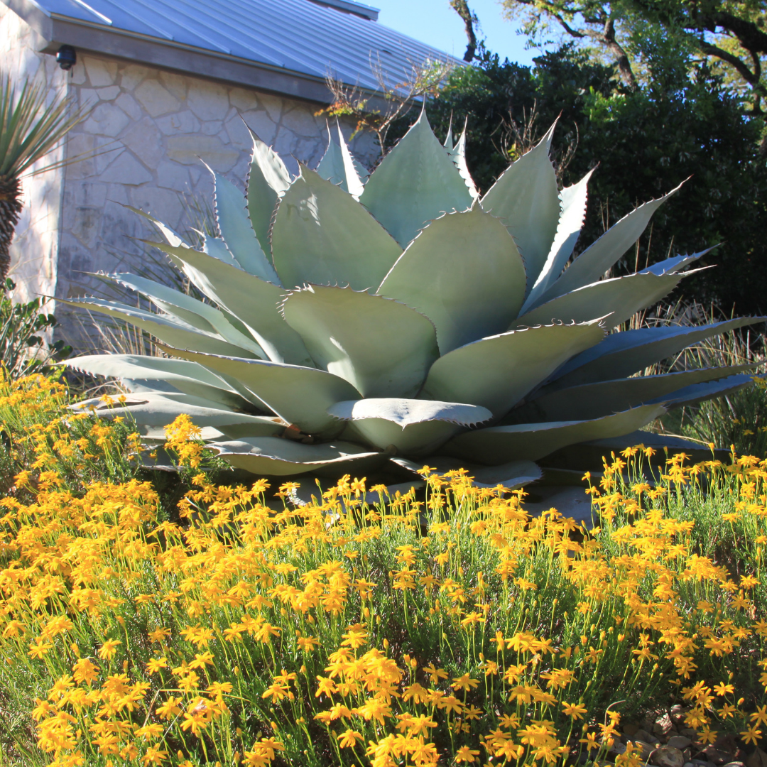 Best Plants For Texas Hill Country Gardens The Texas Wildflower