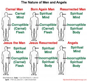 born again incorruptible seed mind spiritual corruptible flesh chart nature angels men Jesus