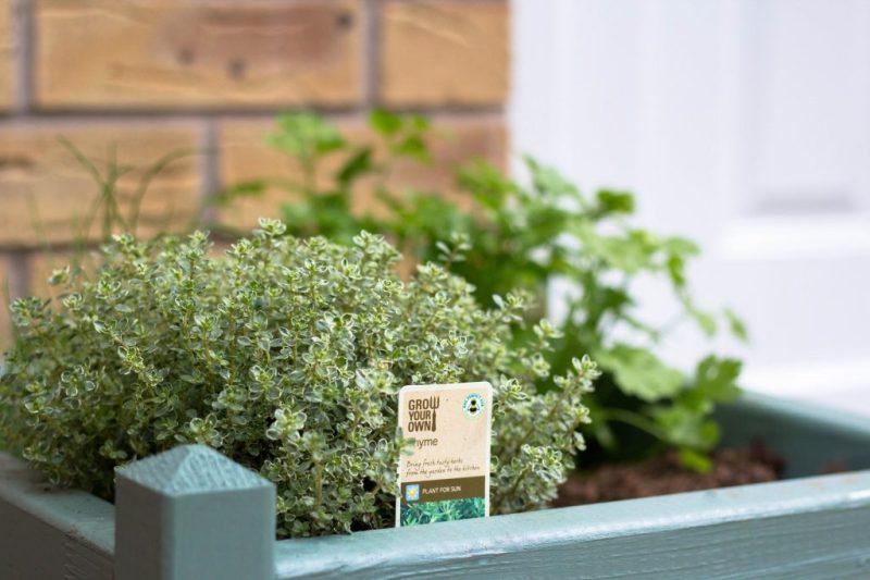 herbs growing by the back door
