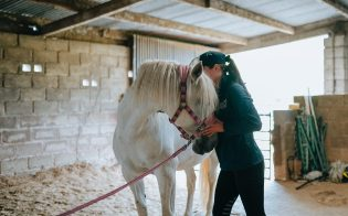 Animal osteopathy - Appointments at home - Treatment - Prices - MSC Osteopathy