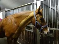 #Horsebogging QX10