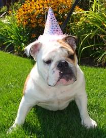Happy birthday Bulldog!