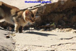 thetimelock.photos