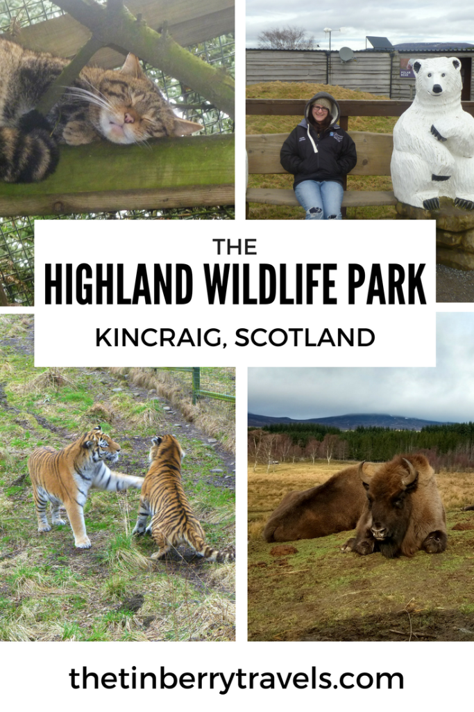 The Highland Wildlife Park, Kincraig - If you've found yourself in the Cairngorms and are looking for a fun day out we'd highly recommend the Highland Wildlife Park. Here's how we got on with our day in the park
