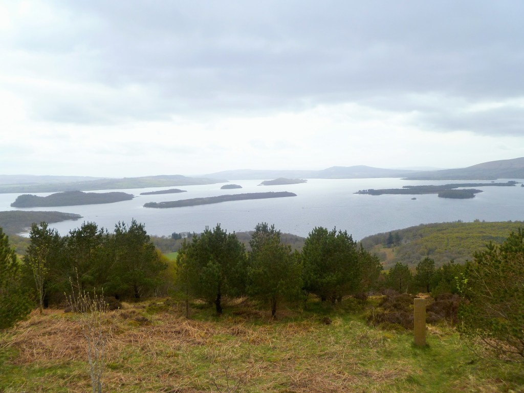 Red Route Viewpoint Cashel Native Forest