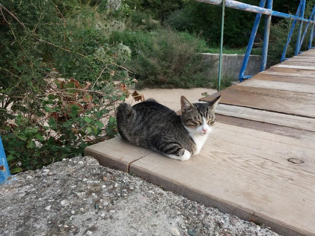 Cat in Prnzo, Montenegro