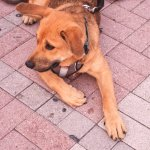 Puppy laying down in Mallory Square Key West FL