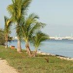 Palm trees near the beach in Key West FL