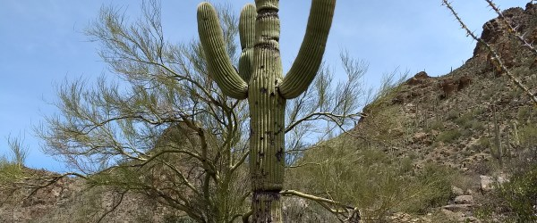 Saguaro Cactus While exploring Tucson, the Catalina Foothills, and Mount Lemon