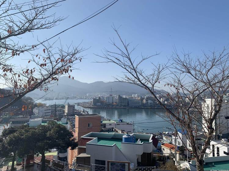 A view of Tongyeong through some winter trees. Bits of pastel buildings and the harbor with mountains in the background.