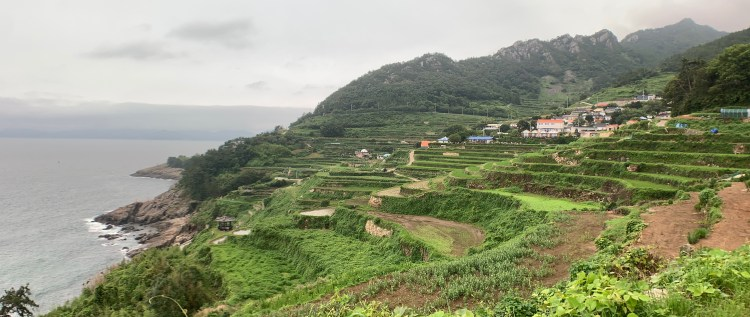 Terraced rice fields filled with brown water and green sprouts looking out to the sea. The rocky mountain descends into the sea behind the fields and a tiny pagoda is at the bottom.