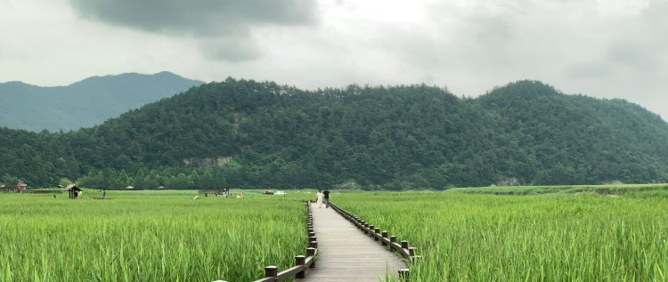 a green leafy marsh with a boardwalk leading through it to a pine tree covered mountain. A couple holds hands, a girl in white dress and the man in black.
