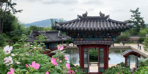 A beautiful traditional Korean gate entrance with a black shingle roof and blue and red decorations. On the left are dinner plate hibiscus in pink. The gate is in front of a pond Suncheon travel guide.